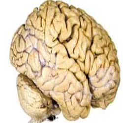 آشنایی با تفاوت میان مغز راست و مغز چپ